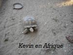 od-et-moi-tortue
